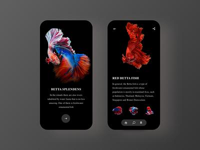 Betta Fish App - Dark Mode dark mode asian app design ui ux clean betta fish app fish app