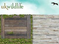 UK Wildlife website concept