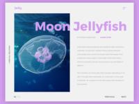 Moon Jelly.