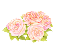 watercolor Rose
