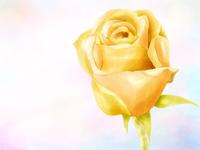 Love Rose watercolor