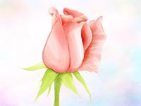 Love Rose 2