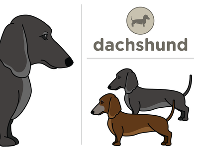 Dachshunds - Debbie Dolly 2020 wiener dachshund dogs vector illustration