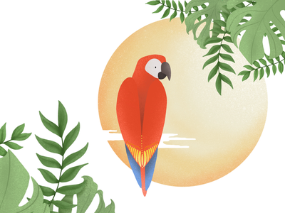 Parrot drawing green parrot procreate illustration