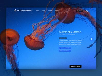 Aquarium Museum Website