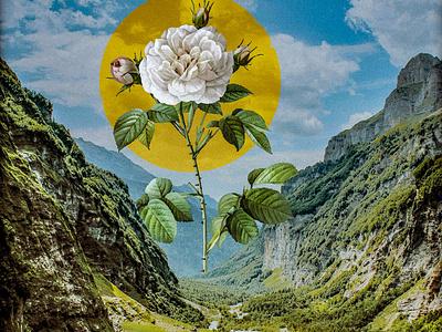 Valley collageart collage photoshop design photomanipulation digital illustration illustration
