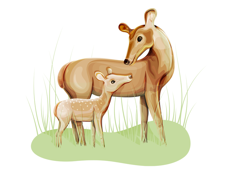 Deer and Fawn deer illustration fawn deers deer adobe illustrator vector illustration illustrator digital art 2d digitalart adobe ilustrator illustration digital illustration 2d art