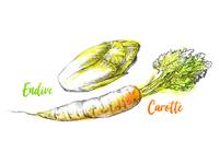 Carotte & Endive