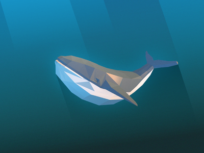 Poli Whale illustration