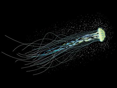 Jellyfish Illustration for Aquarium Packaging
