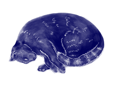 Daily Animals / Cat