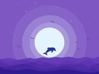 Night dolphin