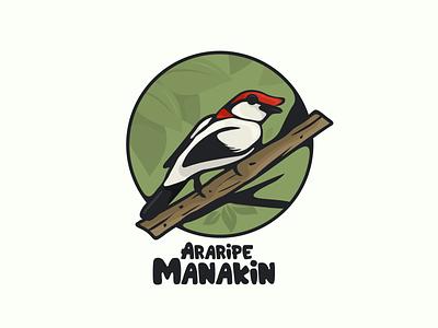 araripe manakin bird typography ux ui flat illustration branding animation vector design logo