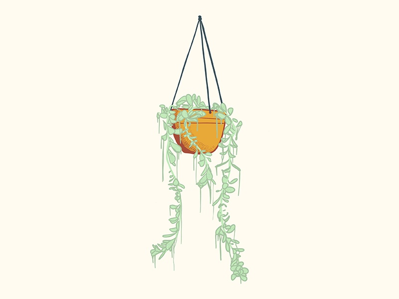 Hanging Plant hanging plant drawing illustration succulent pot plant planter