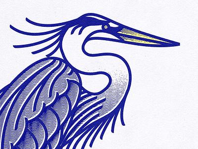 Great Blue Heron tippecanoe marsh birding birdwatching bird audubon heron