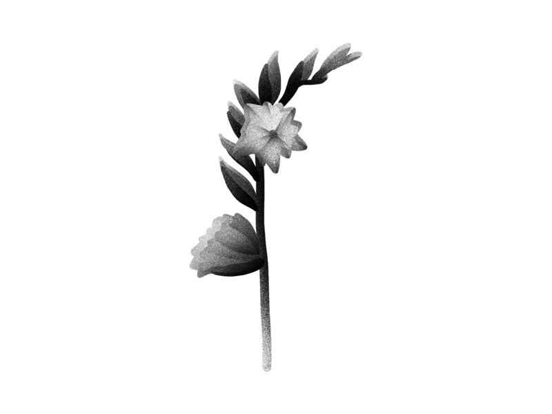 Floral series floral nature blossom flowers botanical black and white photoshop gradient illustration digital