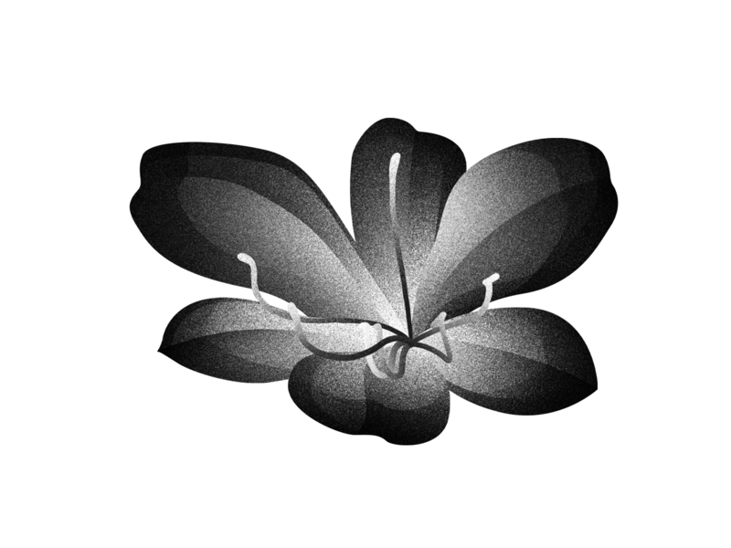 Floral series / Blooming Lotus black and white lotus blooming plant floral flower photoshop gradient illustration digital