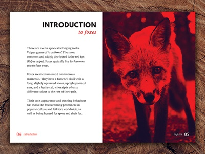 Vulpes - A booklet about Foxes layout grids photoshop indesign design for print print design booklet print vulpes foxes fox