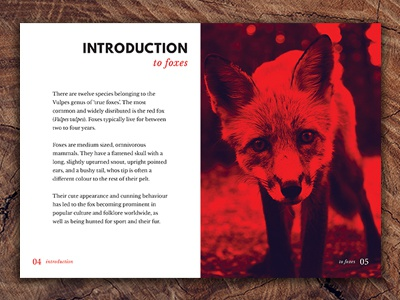 Vulpes - A booklet about Foxes