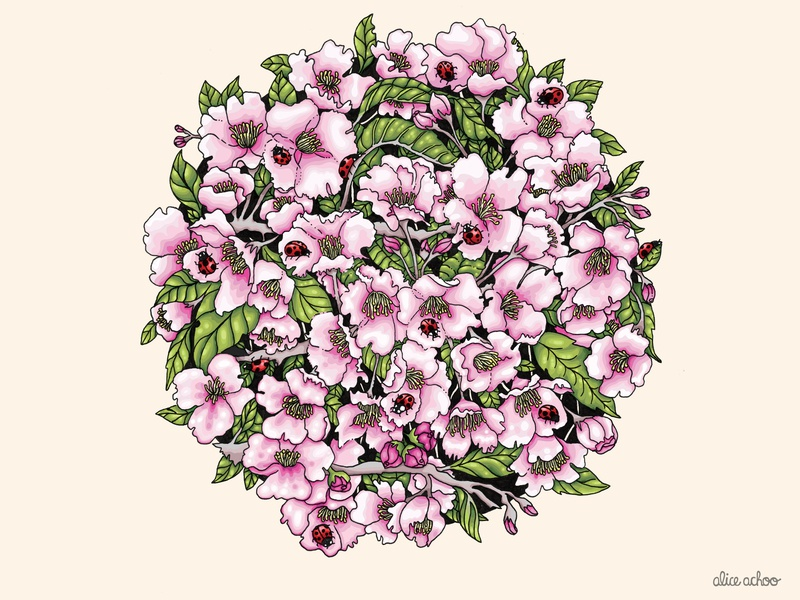 Blossoms pretty floral nature flowers cherryblossoms cherryblossom blossoms digitalart illustration digital colourful