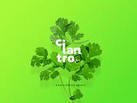 Cilantro Agency