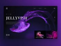 Jellyfish_layout