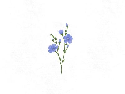 BLUE FLAX flax flower flax blue flax high desert wildflowers icon wildflowers flowers illustration