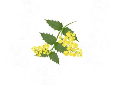 OREGON GRAPE mahonia oregon grape icon flower magic folklore wildflowers flowers illustration