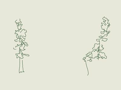 Blind Contour • Trees contour blind