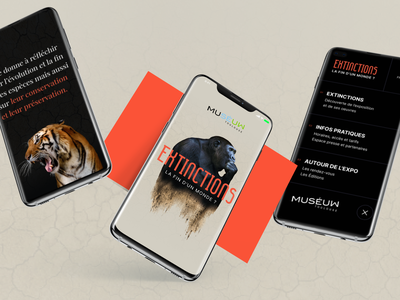 Muséum de Toulouse ux ui interface webdesign musee museum