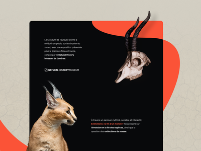 Museum de Toulouse interface webdesign ui ux museum musée