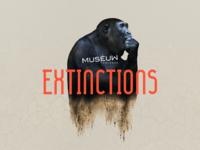 Muséum de Toulouse webdesign interface uxdesign uxui ux museum musée