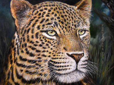Leopard Head - oils on canvas