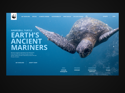 The Hawksbill Turtle WWF website concept webdesign uidesign uxdesign uxdesigner uidesigner design web sustainability typography nature interaction design web design ux ui