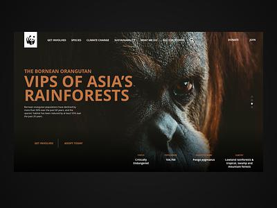 The Bornean Orangutan WWF website concept typography sustainability web uxdesigner uidesigner nature interaction design web design ux ui design
