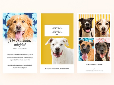 Adopt don't shop! pets cats rescue barcelona stories instagram story event adopt shelter dogs