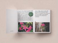Planta - Brand Development
