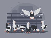 funny  pigeons