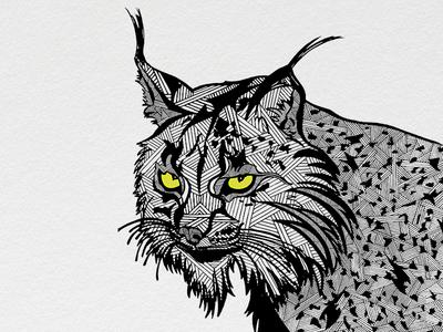 Illustrations | Critically Endangered Animals