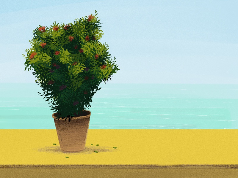 Ocean View sand sky plant digital illustration adobe sketch digital painting sketch illustration ocean sunny