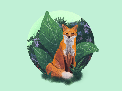 Fox illustration nature drawing procreate animal animals fox