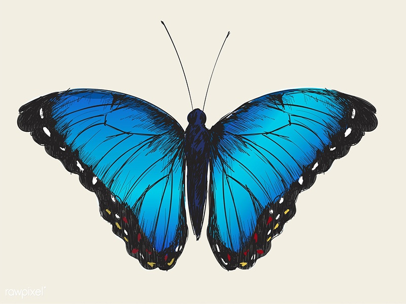Gradient Blue Butterfly