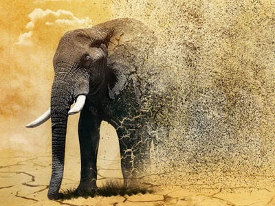 African Elephant Disappearing Effect