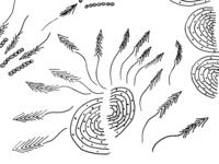 Spiral Pattern