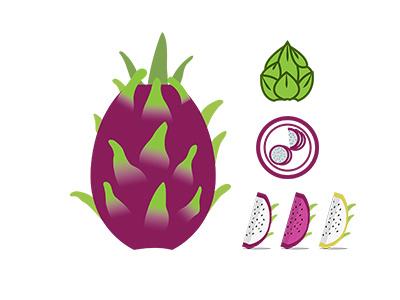 Graphic Assets for Dragon Fruit illustration graphic design