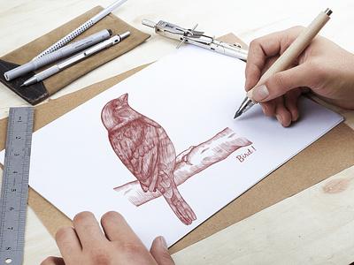 Bird Hand Drawn Sketch illustration design skecth bird logo bird icon bird bird illustration hand draw illustration