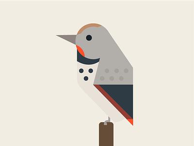 Northern Flicker portland oregon woodpecker illustration flat geometric bird