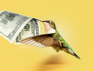 Fast Deposit forex cash instant fast bonus dollar money bird hummingbirds hummingbird withdrawal deposit