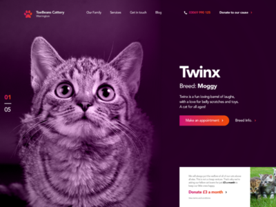 Cattery Landing Page UI Concept