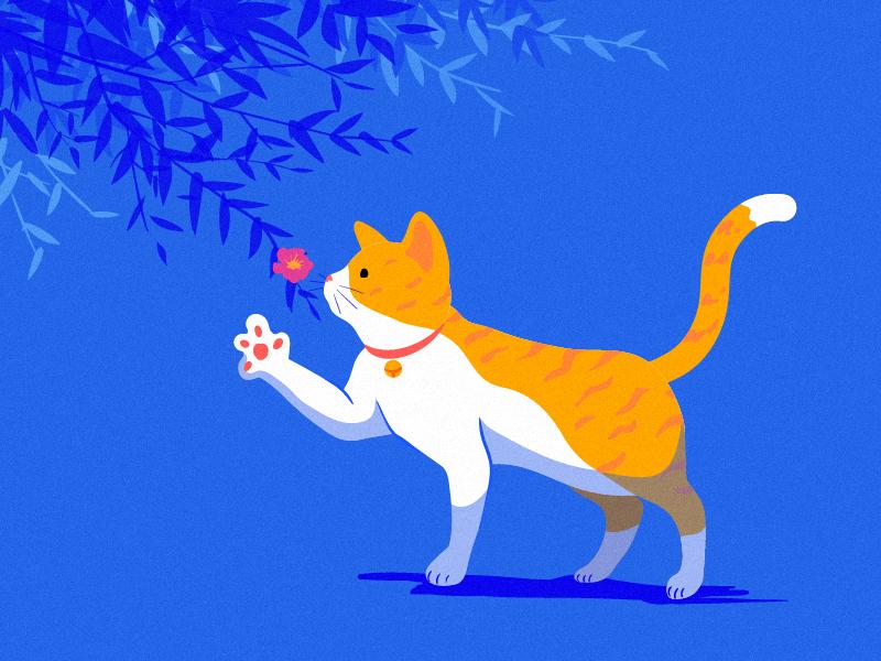 spring imagine cat spring